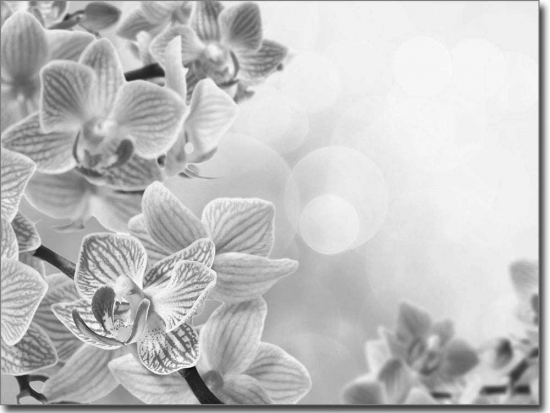 glasbild pink orchidee. Black Bedroom Furniture Sets. Home Design Ideas