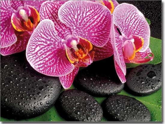 View Images Fensterfoto Oder Klebefolie Mit Orchidee Fensterperle