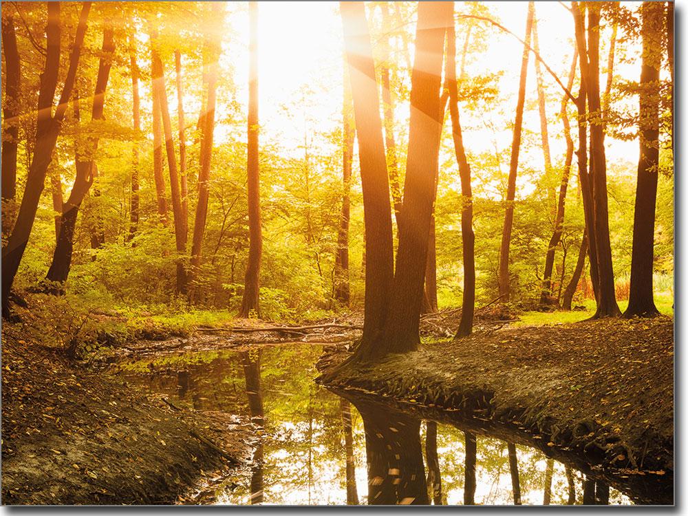 Gewächs Im Wald Kreuzworträtsel