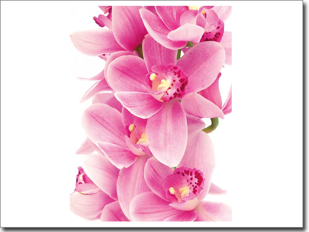 fensterbild orchidee. Black Bedroom Furniture Sets. Home Design Ideas