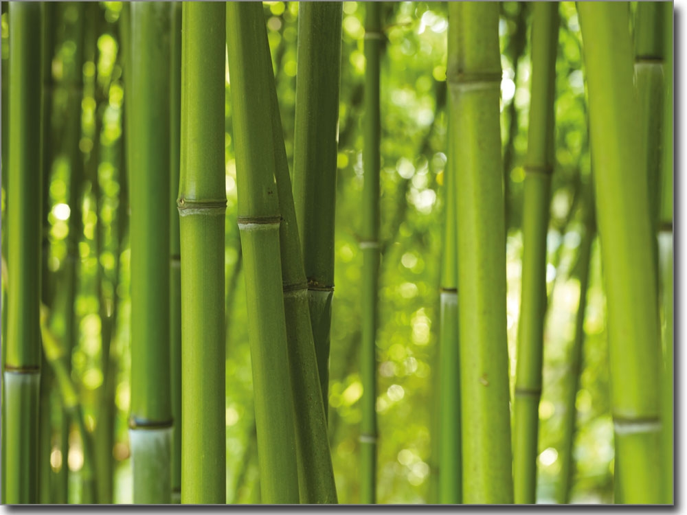 selbstklebendes bild bambus. Black Bedroom Furniture Sets. Home Design Ideas